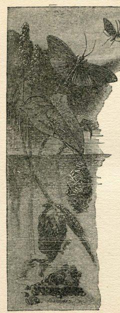 hall-1920