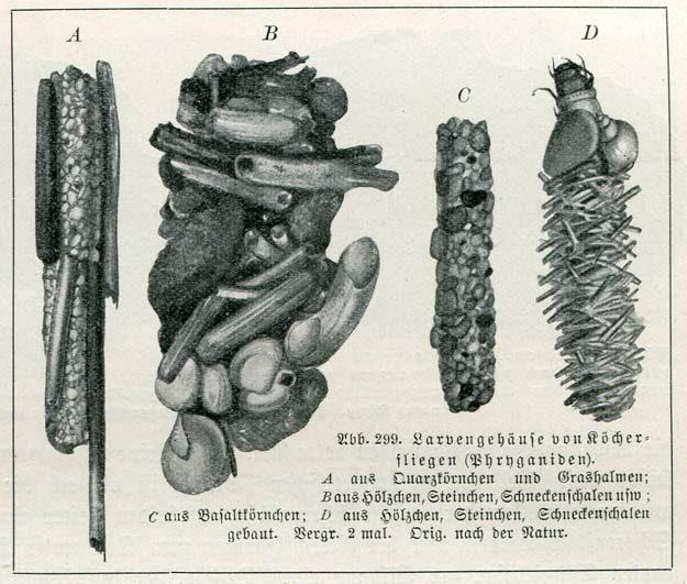 heese-doflein-1914