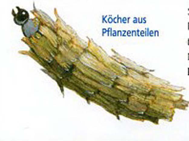 hoffmann-2006-2