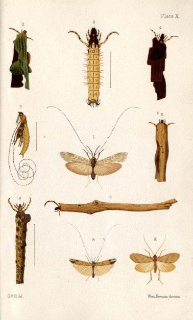 hudson-1904-3