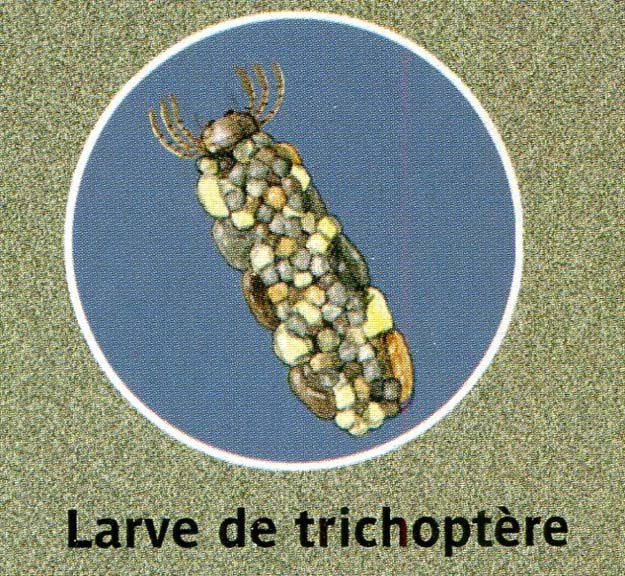 luchesi-2003-1