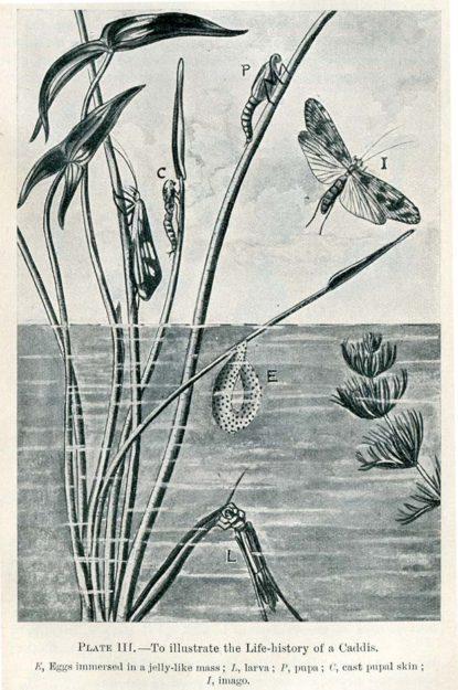 lulham-1913-1
