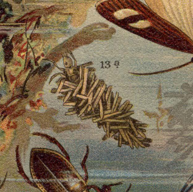 martin-1901-2