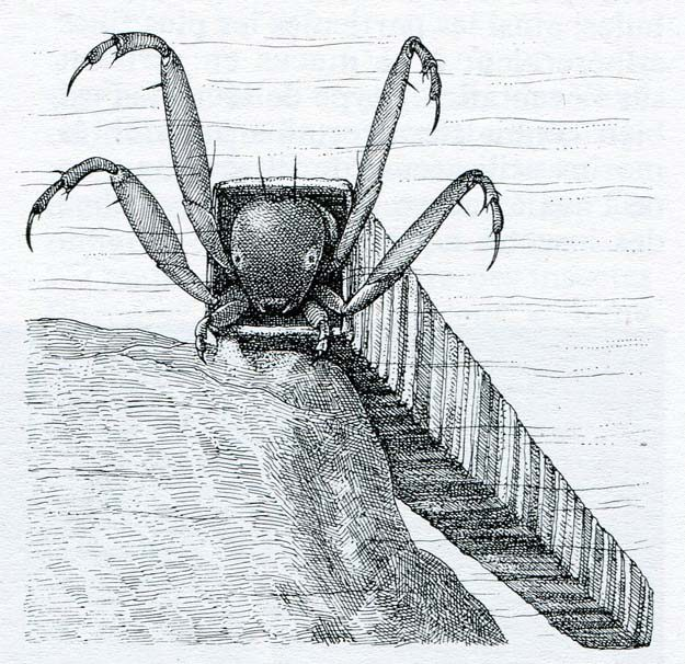 merritt-wallace-1985