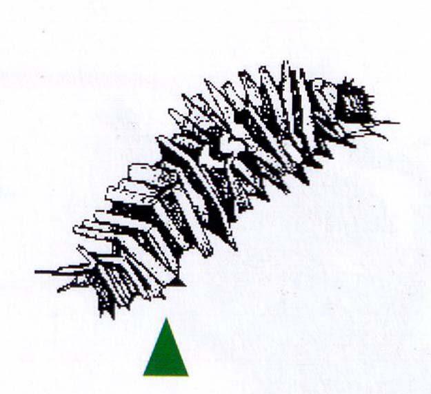 michaud-2003-2