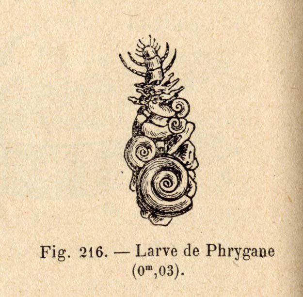 montille-de-1902