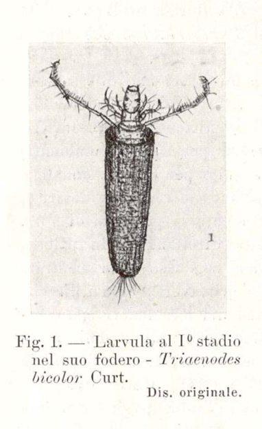 moretti-risaie-1934-1