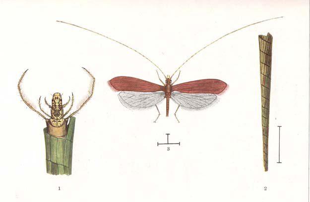 moretti-risaie-1934-2