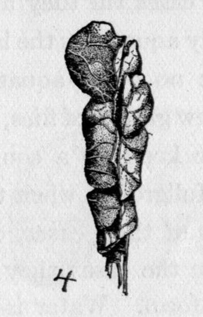 morgan-1936-1