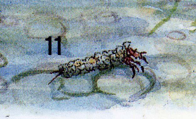 perrin-2005-2