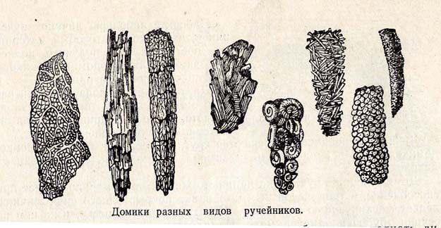 plavilchikov-1954-1