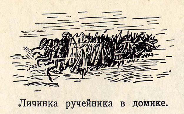 plavilchikov-1954-2