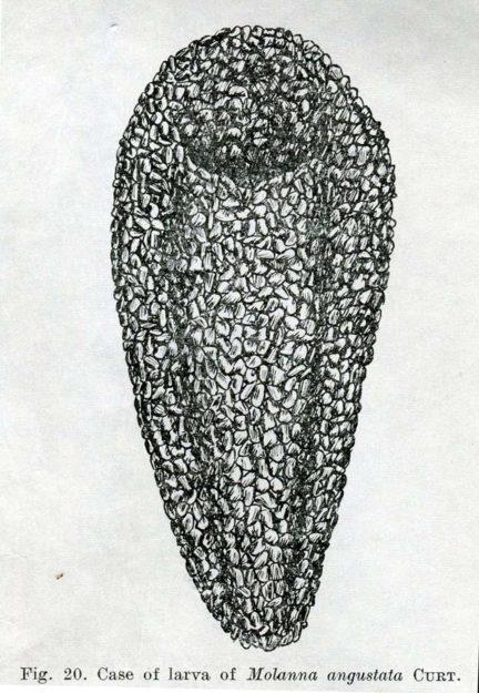 tomaszewski-1973-3