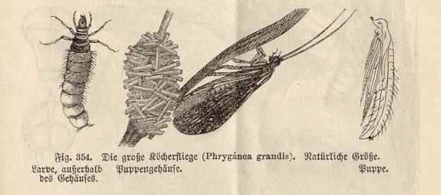 wossidlo-1893